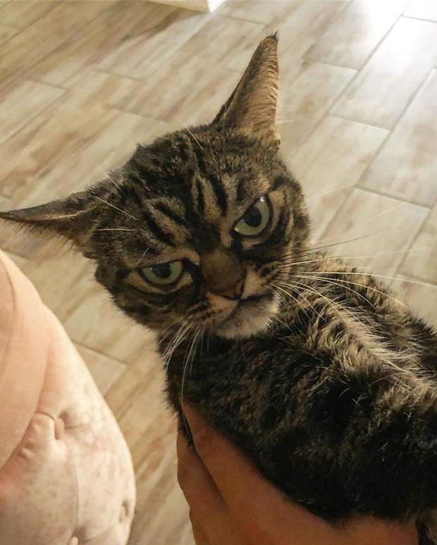 Chú mèo có khuôn mặt cáu kỉnh, lúc nào cũng như đang hờn dỗi cả thế giới nhưng vẫn khiến nhiều người muốn bế về nuôi - Ảnh 10.