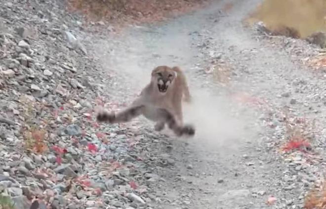 Xem cảnh báo sư tử rình rập con người để biết đâu là sai lầm lớn nhất khi đối mặt với thú dữ - Ảnh 1.
