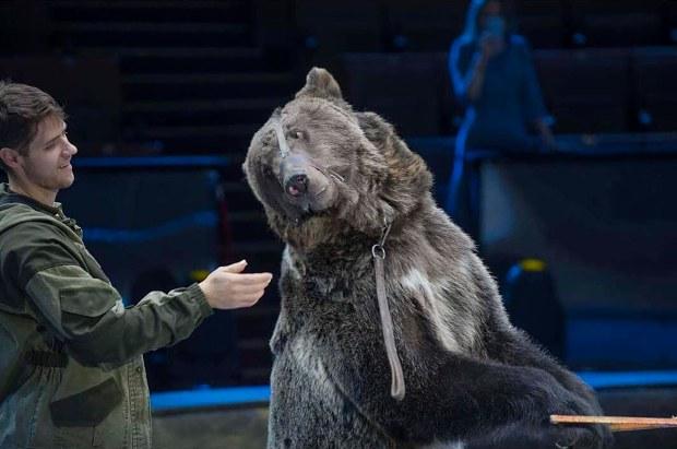 Nga: Quên tháo khẩu trang khi vào chuồng gấu cưng và cái kết thảm khốc - Ảnh 1.