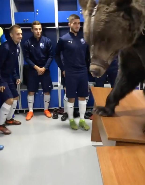 Nga: Quên tháo khẩu trang khi vào chuồng gấu cưng và cái kết thảm khốc - Ảnh 2.