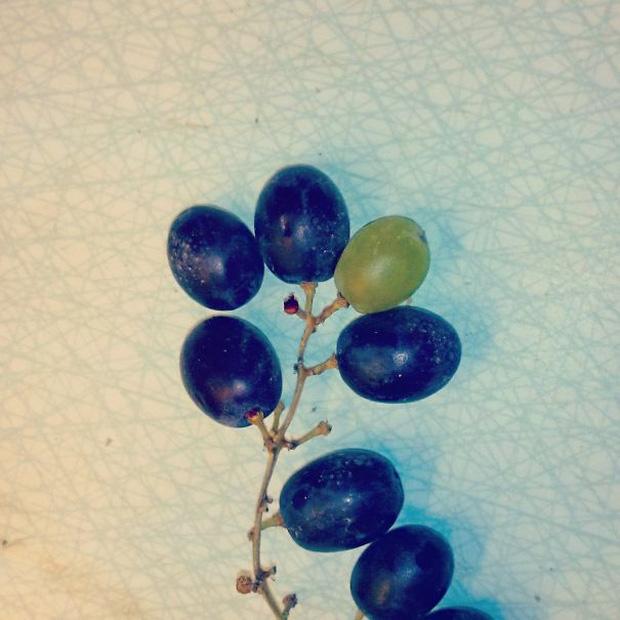 """Những lần dân mạng kinh ngạc trước vẻ ngoài độc lạ của các loại trái cây, quả là bàn tay """"mẹ thiên nhiên"""" tạo ra có khác! - Ảnh 11."""
