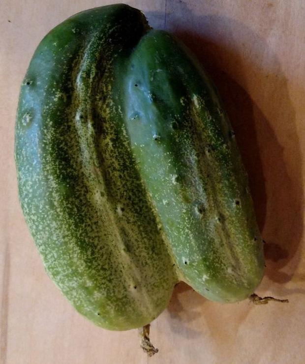 """Những lần dân mạng kinh ngạc trước vẻ ngoài độc lạ của các loại trái cây, quả là bàn tay """"mẹ thiên nhiên"""" tạo ra có khác! - Ảnh 3."""