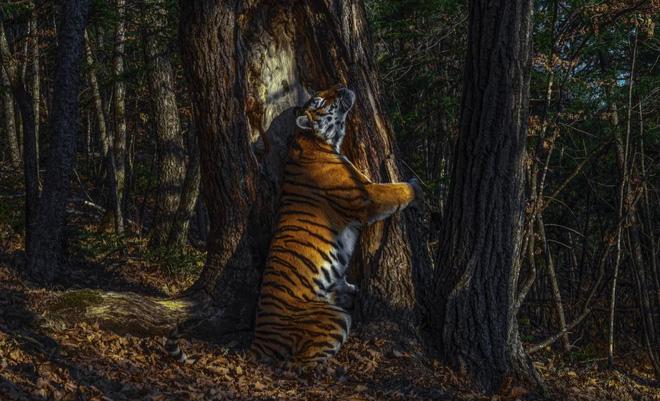 Bộ sưu tập ảnh thiên nhiên của năm: Hổ Siberia ôm cây, chú khỉ chill và con kiến bám lấy bọ cánh cam - Ảnh 1.