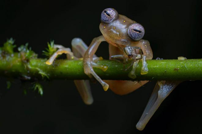 Bộ sưu tập ảnh thiên nhiên của năm: Hổ Siberia ôm cây, chú khỉ chill và con kiến bám lấy bọ cánh cam - Ảnh 12.
