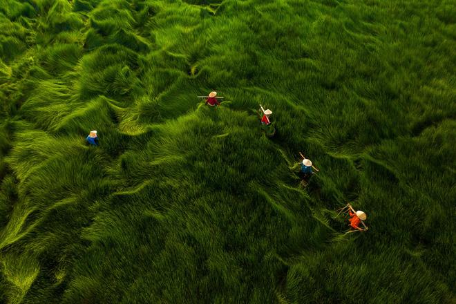 Một loạt tác phẩm Việt gây ấn tượng tại cuộc thi Nhiếp ảnh từ trên không 2020 - Ảnh 4.