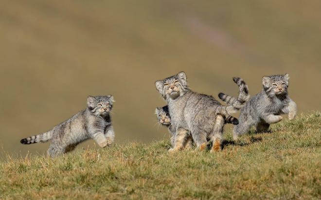 Bộ sưu tập ảnh thiên nhiên của năm: Hổ Siberia ôm cây, chú khỉ chill và con kiến bám lấy bọ cánh cam - Ảnh 9.