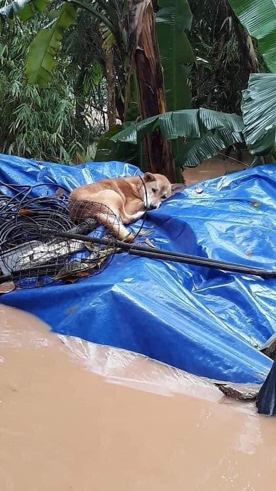 Xúc động hình ảnh người phụ nữ lội trong nước lũ, không quên xách theo chú chó trong chiếc làn nhỏ - Ảnh 4.