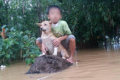 Xúc động hình ảnh người phụ nữ lội trong nước lũ, không quên xách theo chú chó trong chiếc làn nhỏ - Ảnh 6.