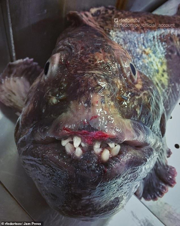 ...thêm một con cá khác quái dị.