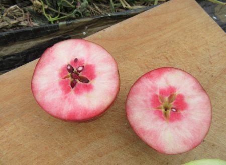 Pendragon: Loại táo vượt qua 14 đối thủ để được đánh giá bổ dưỡng nhất thế giới; ở VN có bán không? - Ảnh 3.