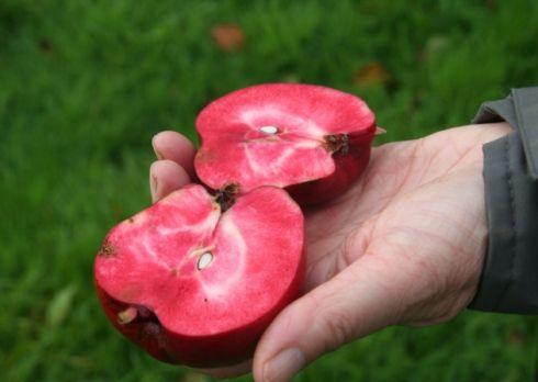 Pendragon: Loại táo vượt qua 14 đối thủ để được đánh giá bổ dưỡng nhất thế giới; ở VN có bán không? - Ảnh 4.