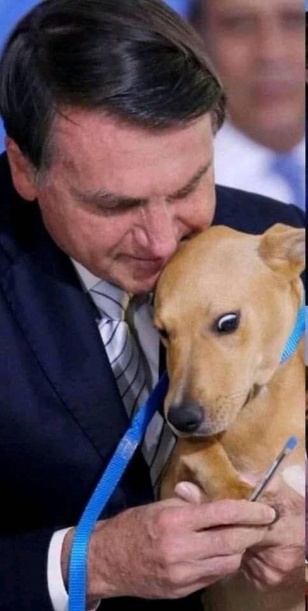 Chú chó số má nhất Brazil: Đại diện anh em bốn chân cả nước đi kí bộ luật cấm ngược đãi động vật với Tổng thống - Ảnh 3.