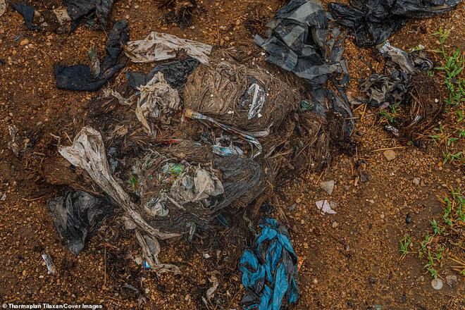 Cảnh tượng nhói lòng: Đàn voi xác xơ quanh quẩn kiếm ăn bên một bãi rác khổng lồ, ăn phải rác nhựa và toàn những thứ không thể tiêu hóa - Ảnh 5.