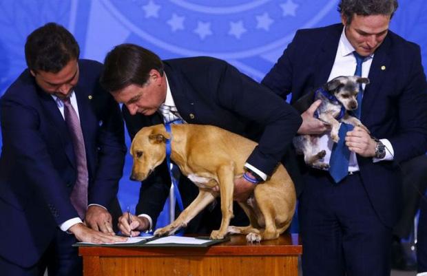 Chú chó số má nhất Brazil: Đại diện anh em bốn chân cả nước đi kí bộ luật cấm ngược đãi động vật với Tổng thống - Ảnh 4.
