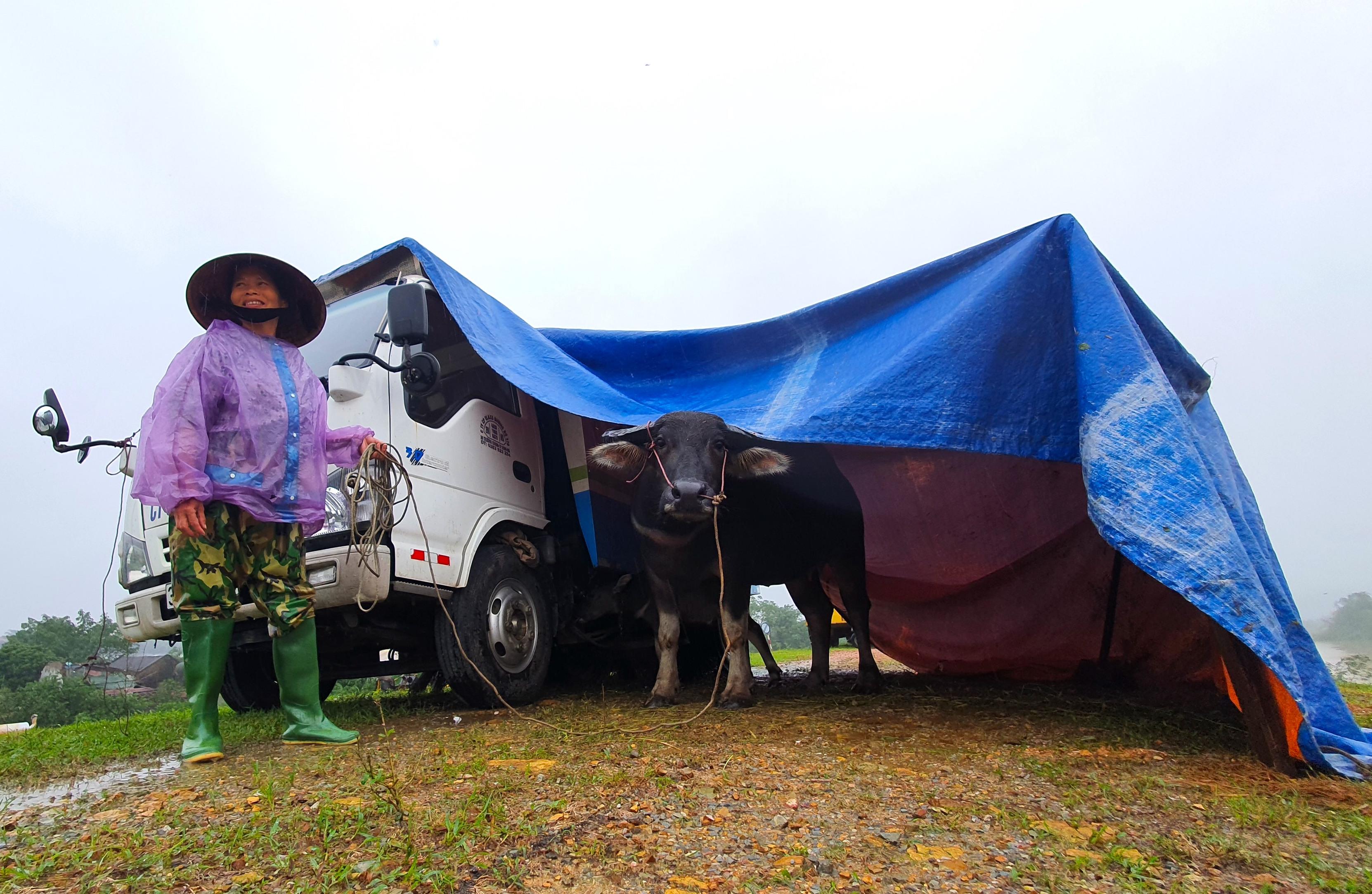Nghệ An: Người dân ven sông phải lên đê dựng lều cho trâu bò trú ẩn - Ảnh 13.