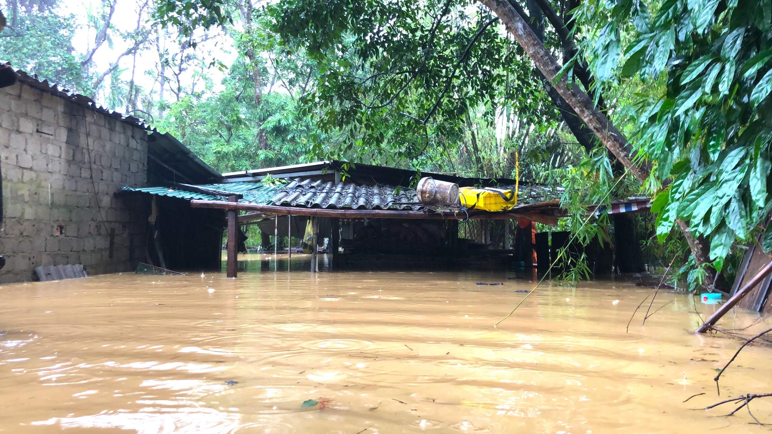 Nghệ An: Người dân ven sông phải lên đê dựng lều cho trâu bò trú ẩn - Ảnh 5.