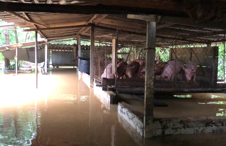 Nghệ An: Người dân ven sông phải lên đê dựng lều cho trâu bò trú ẩn - Ảnh 10.