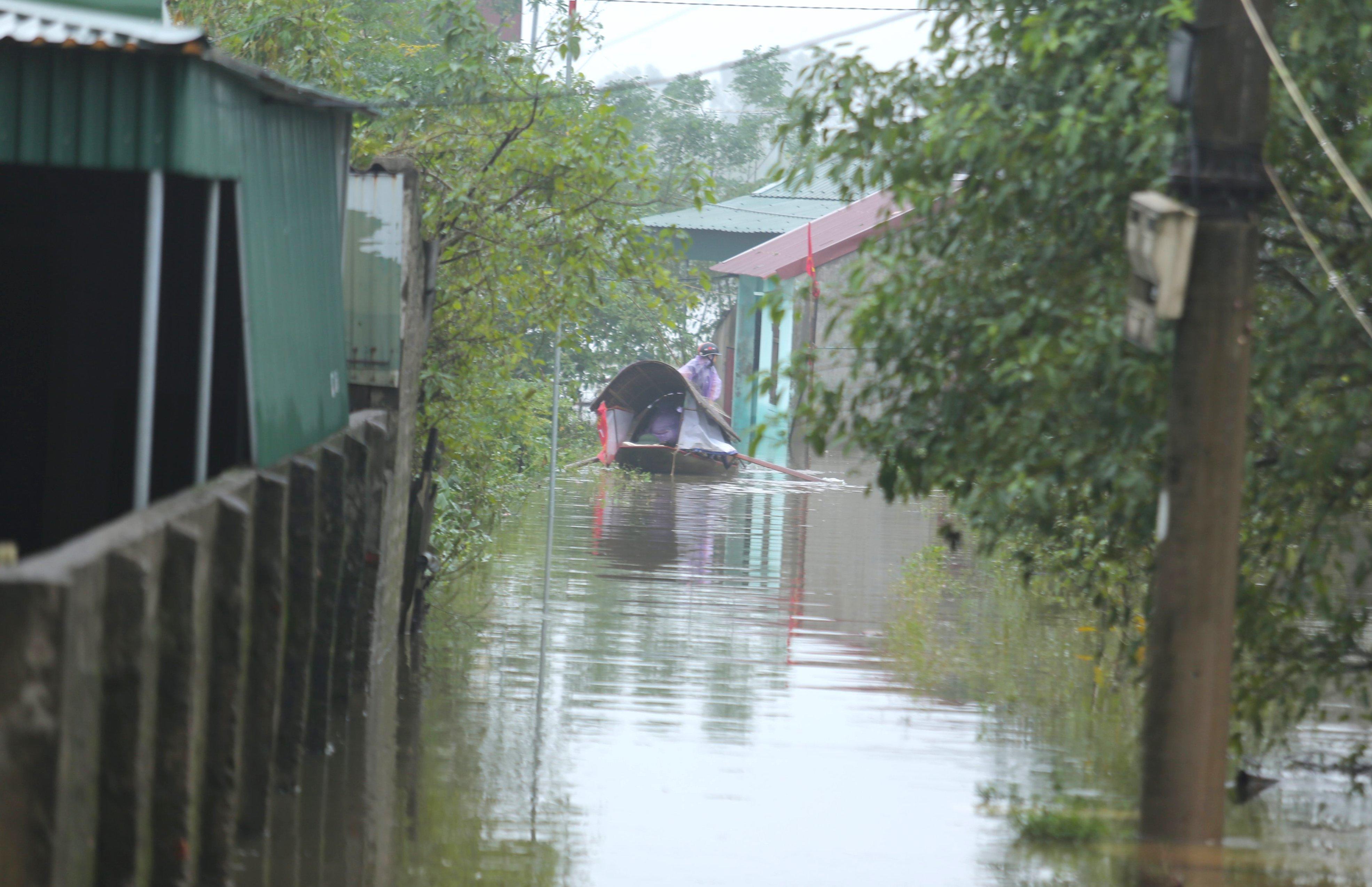 Nghệ An: Người dân ven sông phải lên đê dựng lều cho trâu bò trú ẩn - Ảnh 6.