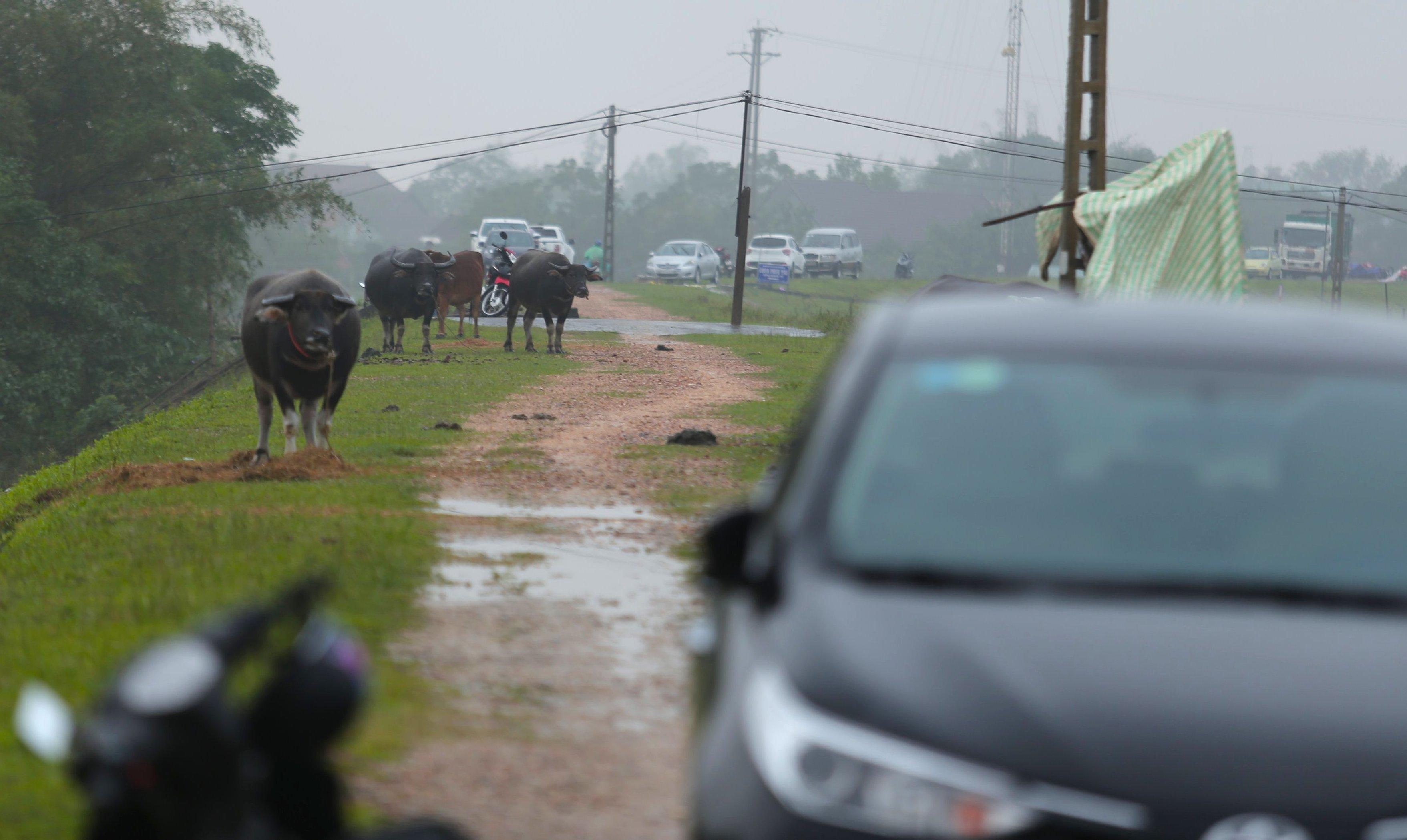 Nghệ An: Người dân ven sông phải lên đê dựng lều cho trâu bò trú ẩn - Ảnh 16.