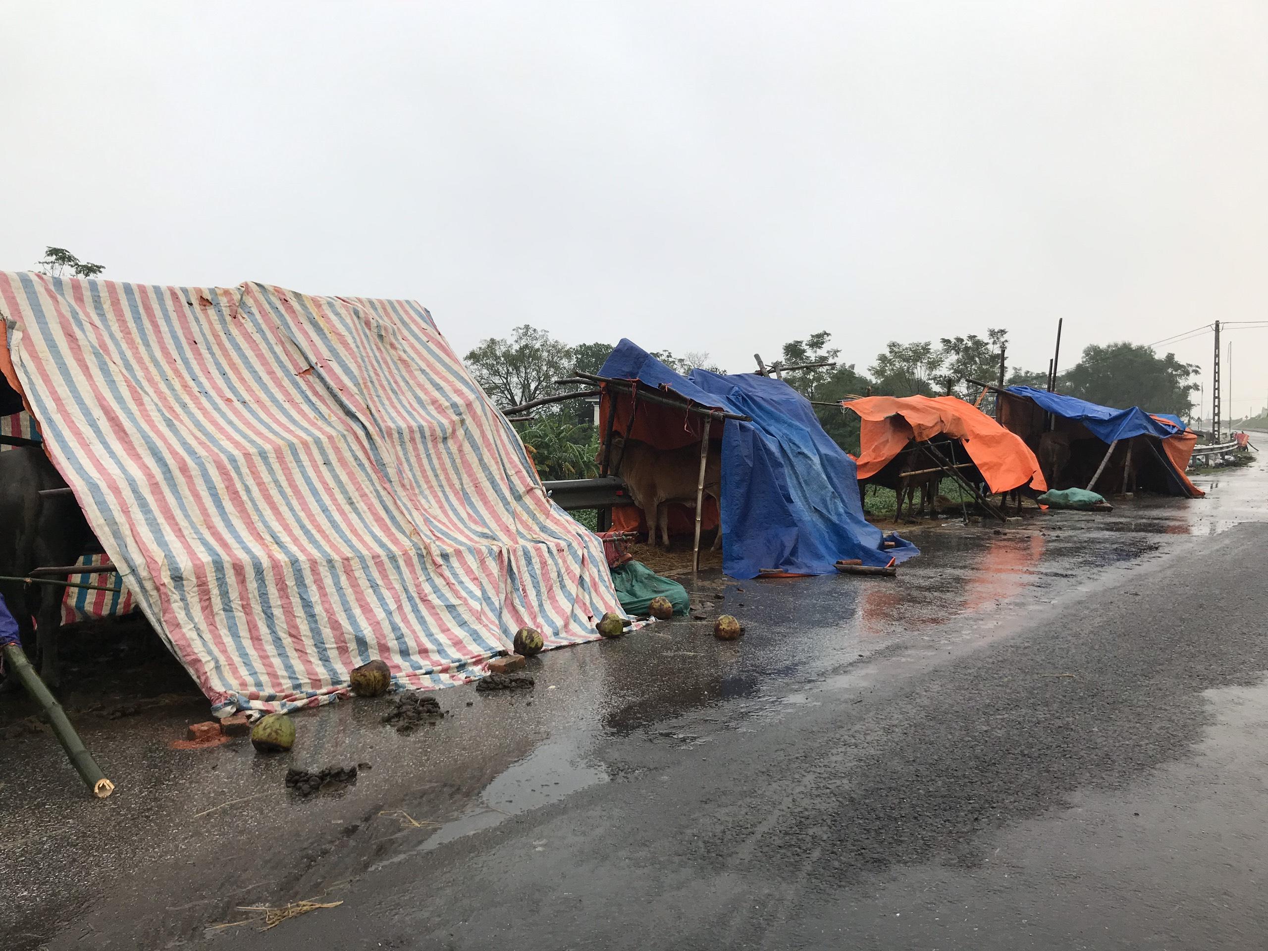 Nghệ An: Người dân ven sông phải lên đê dựng lều cho trâu bò trú ẩn - Ảnh 14.