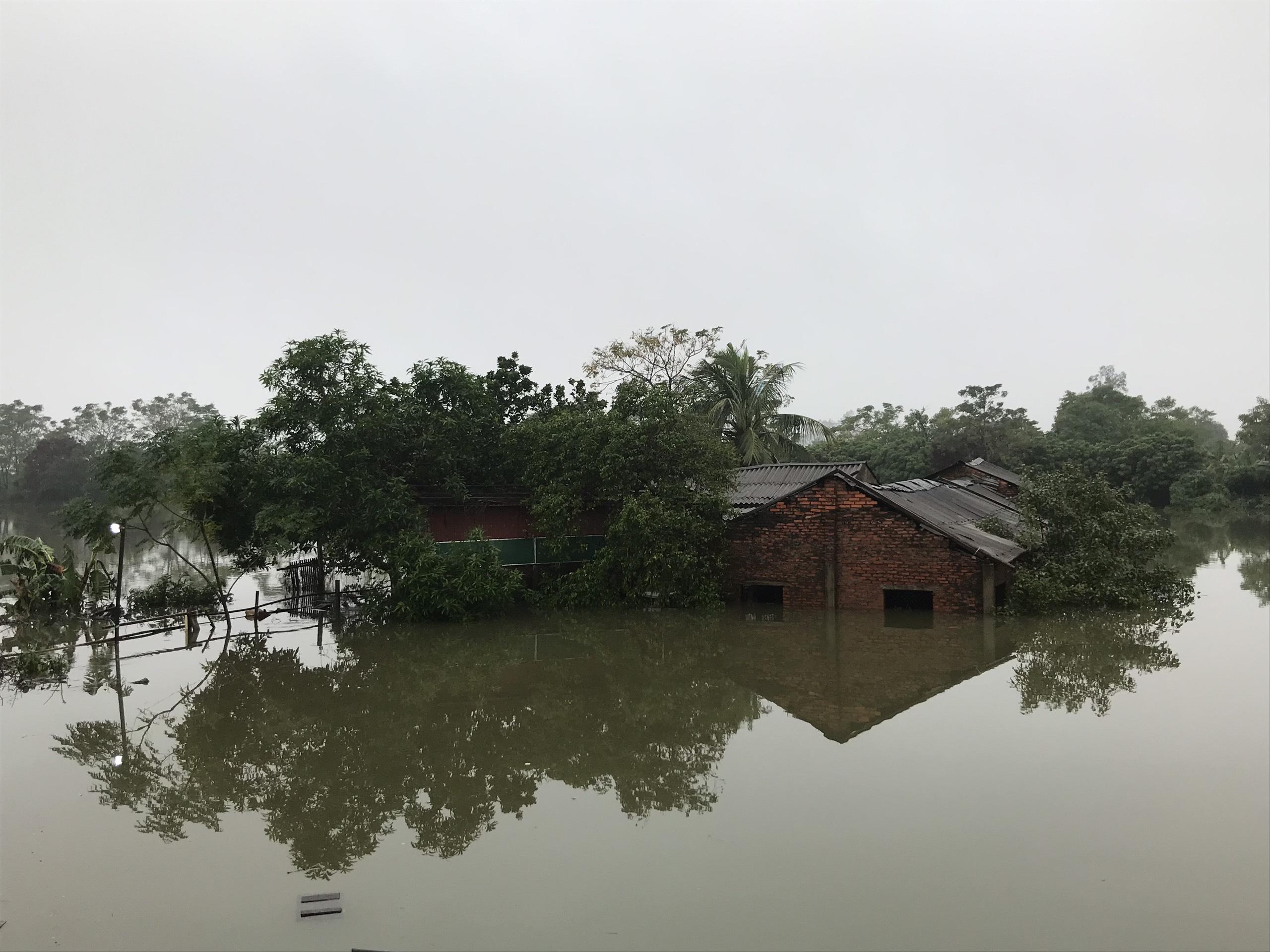 Nghệ An: Người dân ven sông phải lên đê dựng lều cho trâu bò trú ẩn - Ảnh 7.