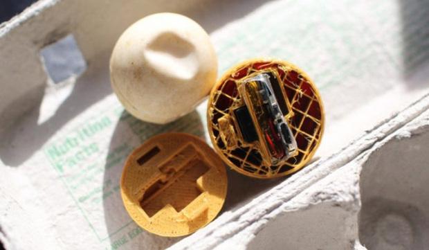 Cú lừa đỉnh cao: Khoa học chế trứng rùa giả để triệt phá một trong những loại tội phạm phổ biến và nguy hiểm nhất với thế giới động vật - Ảnh 3.