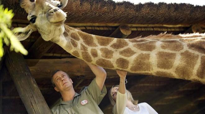 Số phận bi thảm của loài động vật bị gán cho biệt danh cột chống sét biết đi - Ảnh 6.