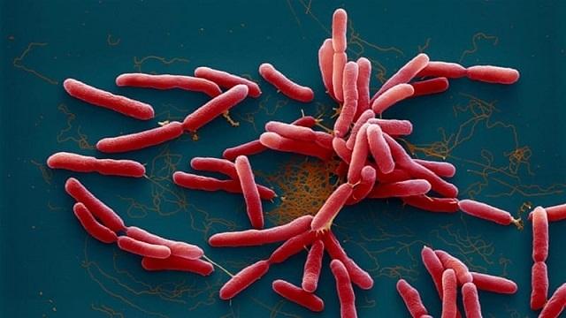 Vi khuẩn khiến chủ tịch xã đi cứu trợ lũ tử vong từng bị lãng quên trong một thời gian dài - Ảnh 1.
