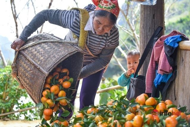 Đưa giống cam nổi tiếng ở Hòa Bình về trồng, dân Cao Sơn đổi đời thu hàng chục triệu đồng - Ảnh 5.