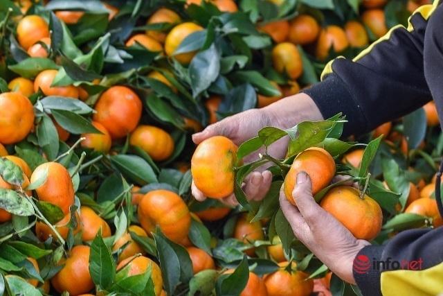 Đưa giống cam nổi tiếng ở Hòa Bình về trồng, dân Cao Sơn đổi đời thu hàng chục triệu đồng - Ảnh 6.