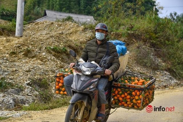 Đưa giống cam nổi tiếng ở Hòa Bình về trồng, dân Cao Sơn đổi đời thu hàng chục triệu đồng - Ảnh 7.