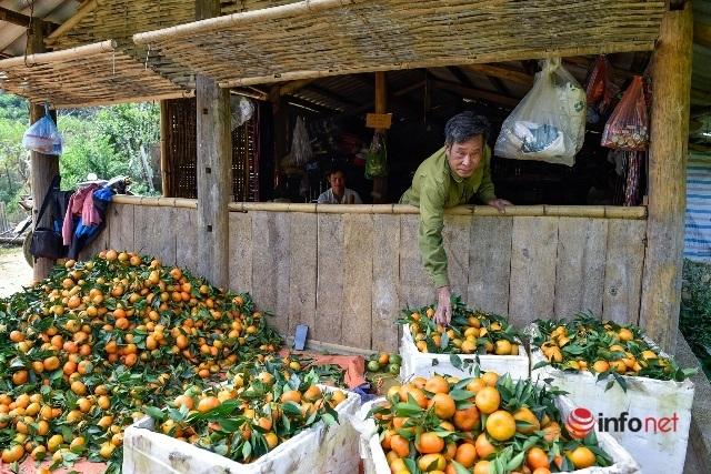 Đưa giống cam nổi tiếng ở Hòa Bình về trồng, dân Cao Sơn đổi đời thu hàng chục triệu đồng - Ảnh 8.