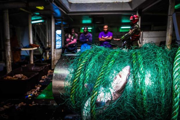 Cá mập thắt cổ, cá voi dạt bờ...: Chùm ảnh cho thấy bi kịch dưới đại dương đang trở nên đáng sợ đến mức nào - Ảnh 5.