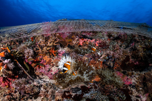 Cá mập thắt cổ, cá voi dạt bờ...: Chùm ảnh cho thấy bi kịch dưới đại dương đang trở nên đáng sợ đến mức nào - Ảnh 6.