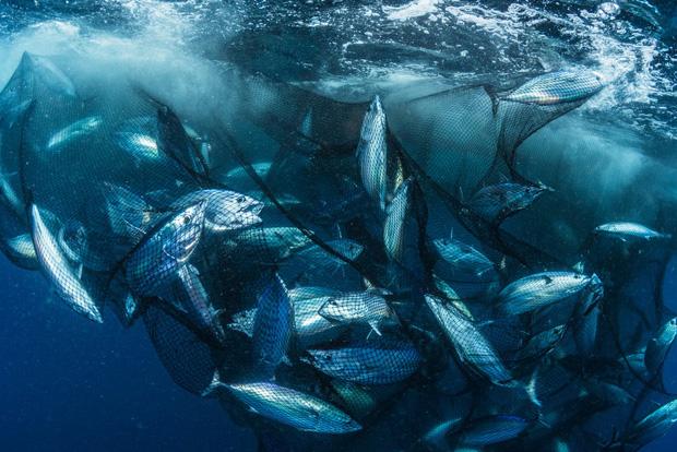 Cá mập thắt cổ, cá voi dạt bờ...: Chùm ảnh cho thấy bi kịch dưới đại dương đang trở nên đáng sợ đến mức nào - Ảnh 7.