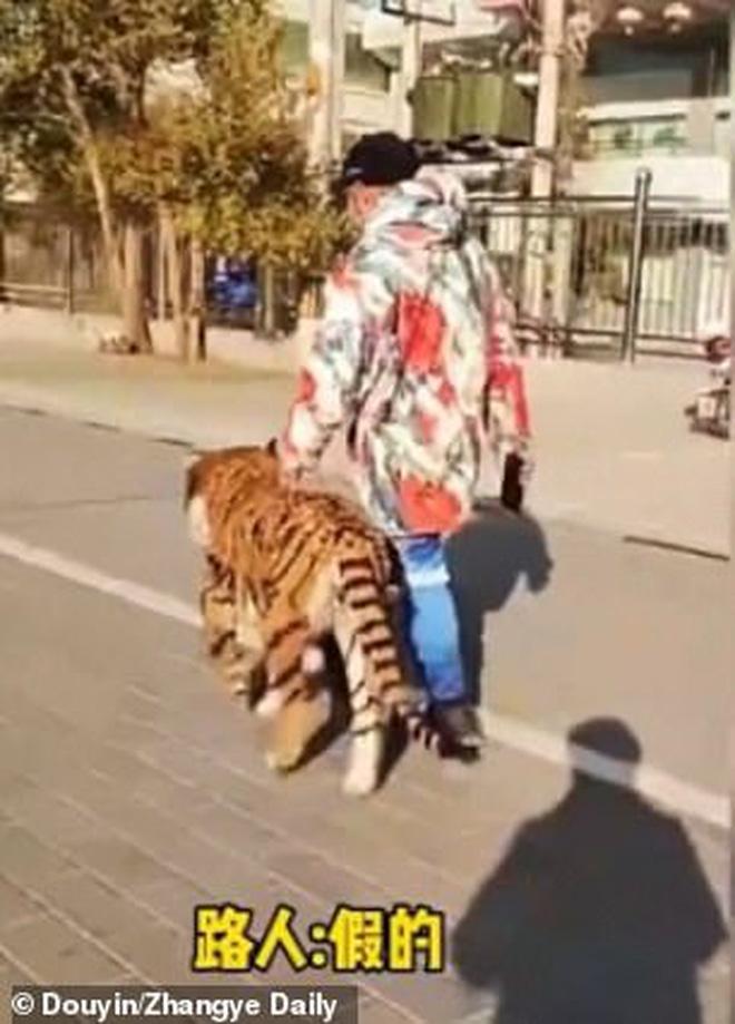Người dân hết hồn vì thấy hổ lớn lang thang trên phố, nhìn kỹ lại thêm phẫn nộ với hành động ích kỷ của con người - Ảnh 3.