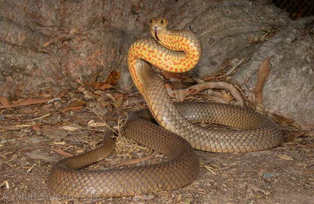 Trong tấm hình này có một sinh vật cực kỳ nguy hiểm, và nó cho thấy bạn cần chuẩn bị kỹ như thế nào để sinh tồn được ở Úc - Ảnh 5.