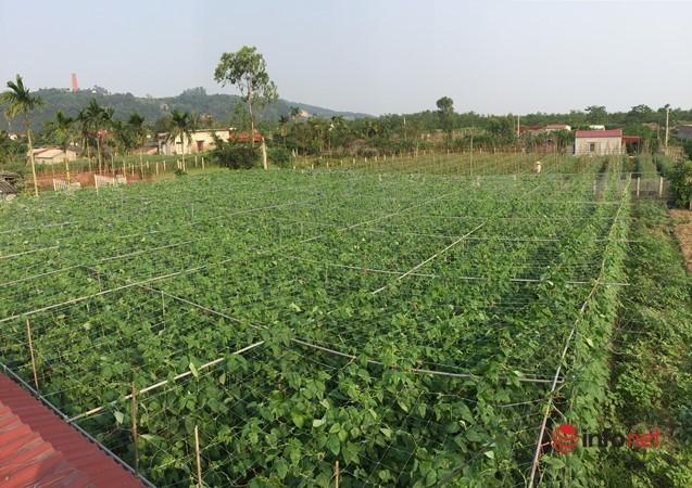 9X chế biến món ăn lạ từ bí đỏ và đậu đũa muối chua, xuất khẩu thu tiền tỷ - Ảnh 1.