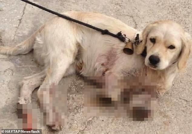 Sang nhà bên đuổi gà, chú chó bị hàng xóm bẻ gãy 2 chân nhưng hành động của chủ nhân con vật mới gây phẫn nộ, cảnh sát phải vào cuộc điều tra - Ảnh 3.