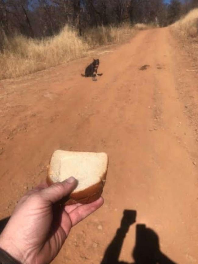 Lái xe trên đường gặp chú chó lạc chủ, tài xế đến giúp thì con vật từ chối, định rời đi trước khi hốt hoảng thấy cảnh tượng gần đó - ảnh 3