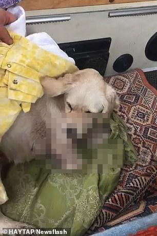 Sang nhà bên đuổi gà, chú chó bị hàng xóm bẻ gãy 2 chân nhưng hành động của chủ nhân con vật mới gây phẫn nộ, cảnh sát phải vào cuộc điều tra - Ảnh 5.