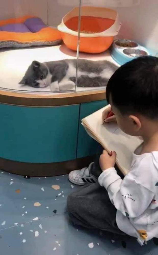 Cậu bé lăn lộn cả tiếng để vẽ mèo nộp cho cô giáo, tưởng đẹp miễn chê ai ngờ lại thành ra thế này - Ảnh 3.