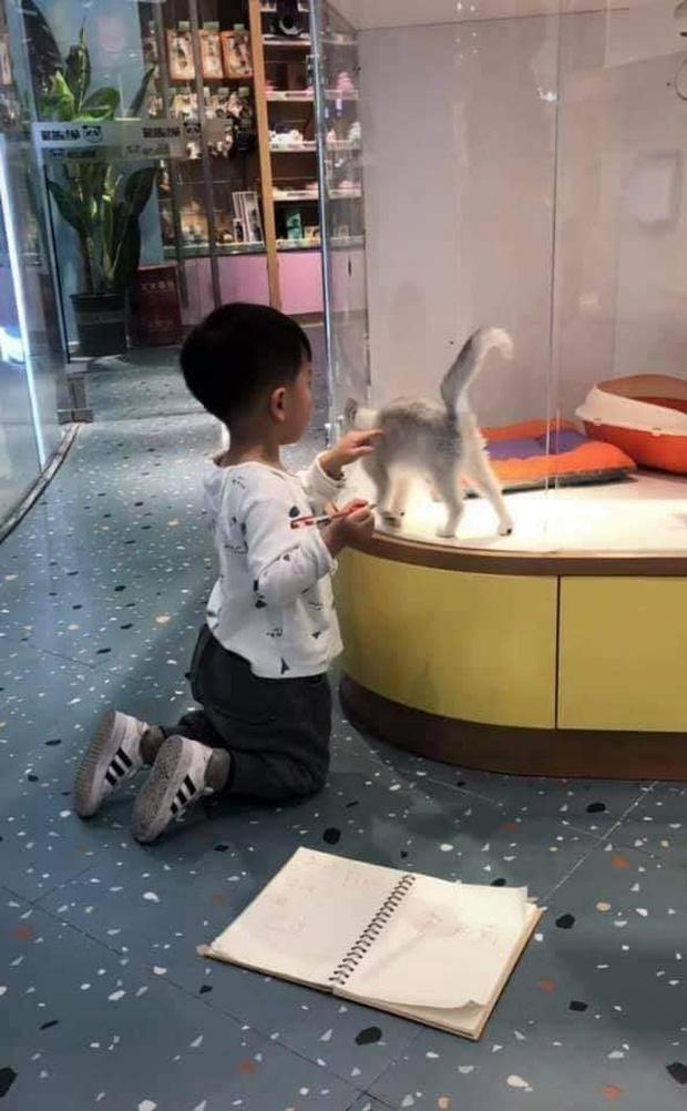 Cậu bé lăn lộn cả tiếng để vẽ mèo nộp cho cô giáo, tưởng đẹp miễn chê ai ngờ lại thành ra thế này - Ảnh 5.