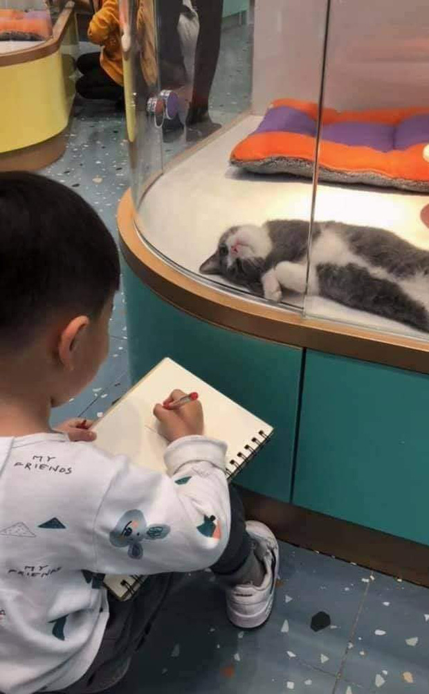 Cậu bé lăn lộn cả tiếng để vẽ mèo nộp cho cô giáo, tưởng đẹp miễn chê ai ngờ lại thành ra thế này - Ảnh 6.