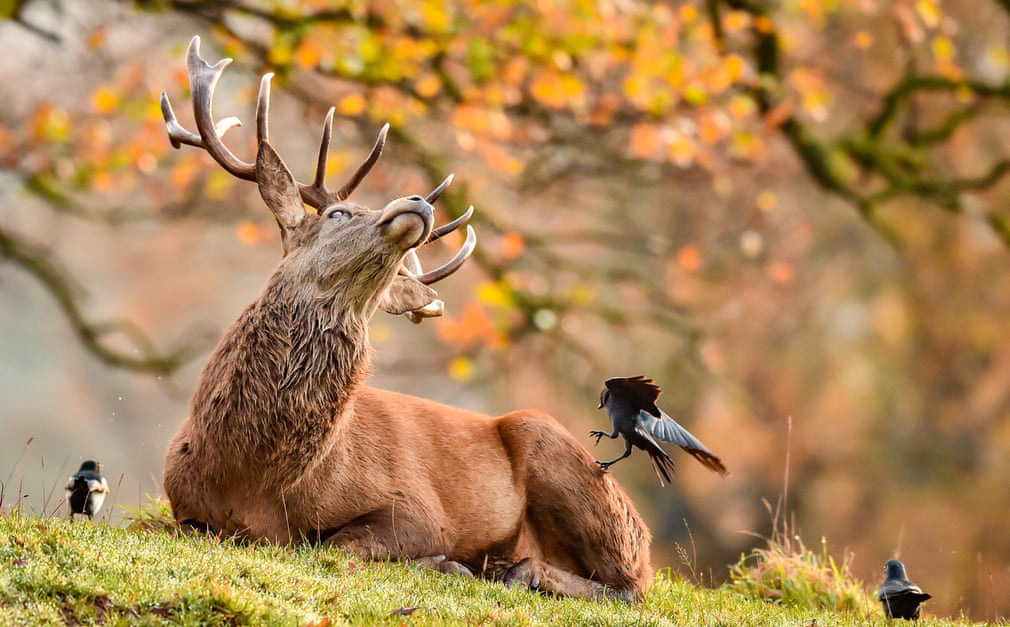 24h qua ảnh: Quạ bắt bọ cho hươu trong tiết trời mùa thu