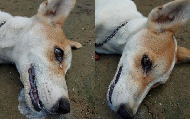 Chó cưng sủa liên tục trong đêm, nhà chủ không mảy may nghi ngờ, đến sáng thấy cảnh đau lòng mới biết nhờ con vật mà gia đình thoát nạn - Ảnh 1.