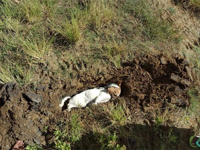 Chó cưng sủa liên tục trong đêm, nhà chủ không mảy may nghi ngờ, đến sáng thấy cảnh đau lòng mới biết nhờ con vật mà gia đình thoát nạn - Ảnh 4.