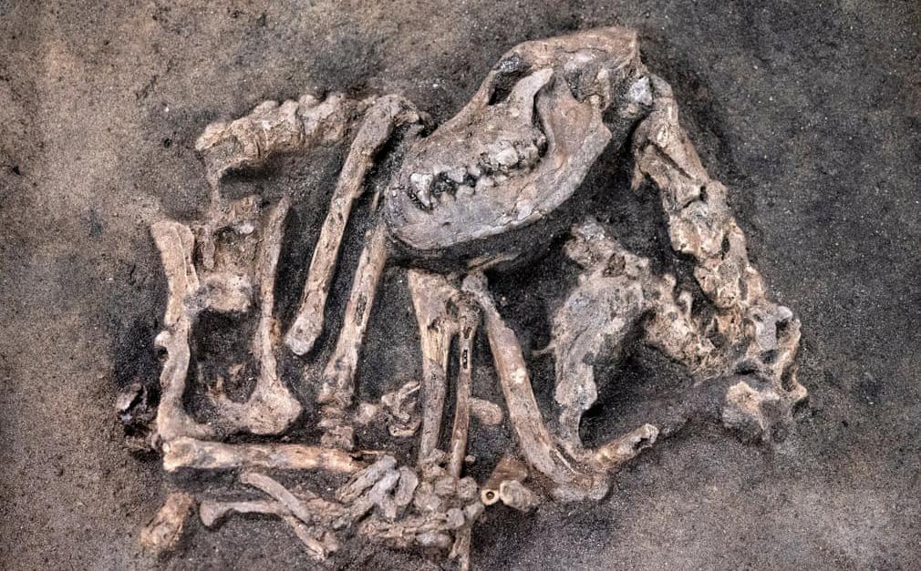 24h qua ảnh: Phát hiện hóa thạch chó từ thời kỳ đồ đá