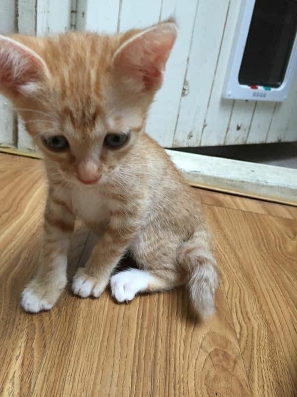 Cho bà nội mèo con nhặt ngoài đường, 9 tháng sau về chơi, chàng trai sững sờ vì màn lột xác không thể nhận ra - Ảnh 1.