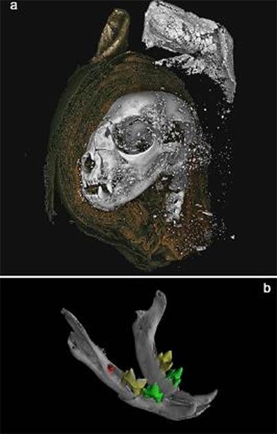 Chụp X-quang và CT scan 800 xác ướp: Chuyên gia phát hiện tất cả chỉ là một cú lừa - Ảnh 5.